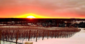 Snowshoe Sundays! @ Rove Estate Vineyard & Winery | Traverse City | Michigan | United States